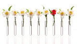 Test tubes with white flowers except one that is red