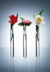 Three glass test tubes with different flowers standing in line