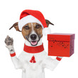 surprise christmas dog with a present box