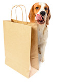 dog with paper bag