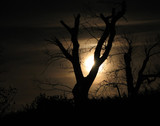 Moonlight and Tree