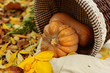 Colorful squash and mini pumpkins with fabric fall leaves for a