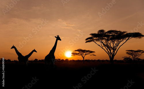 Plexiglas Giraffe Setting sun with silhouettes of Giraffes on Safari
