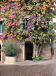Bougainvillea am Haus