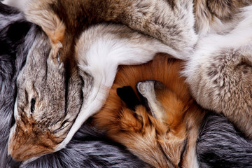 Portrait of beautiful fox skin