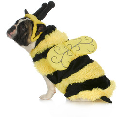 dog wearing bee costume