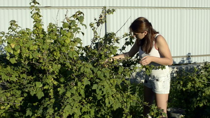 A young woman and a blackcurrant bush