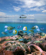 Boat alone above a coral reef with shoal of fish