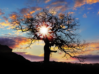 Alone tree at sunset