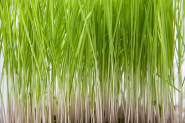 Grass tips