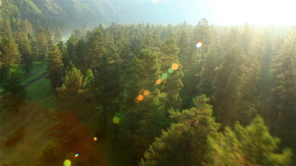 flight over beautiful forest in sunny day