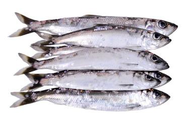 Herring fish stock isolated on white background