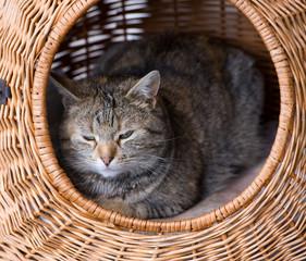 cat is resting