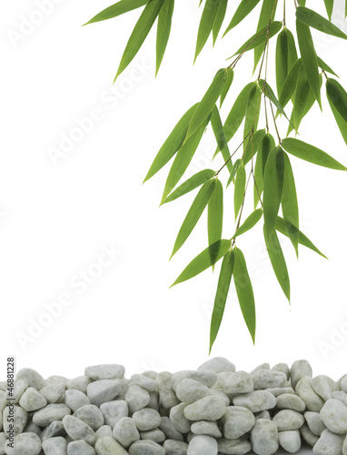 Green bamboo and white pebble