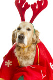 Dog dressed as Santa Claus