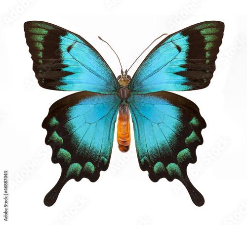 Deurstickers Vlinder Blue butterfly