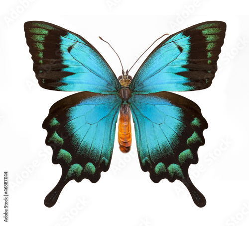 Poster Vlinder Blue butterfly