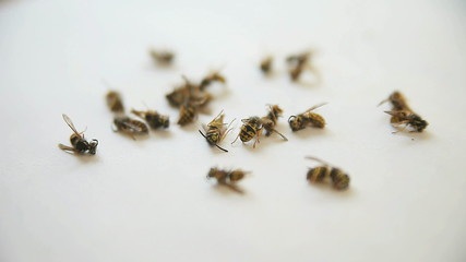 wasps that have fallen from a ceiling after being sprayed