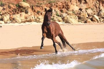 freilaufendes pferd am strand