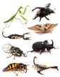 ������, ������: insects and scorpions
