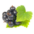 Blackcurrant with Green Leaves Isolated on White Background