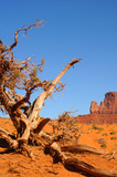 Ancient gnarled tree and butte at Monument Valley