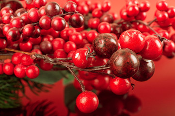 Christmas card with berries and a fir-tree branch