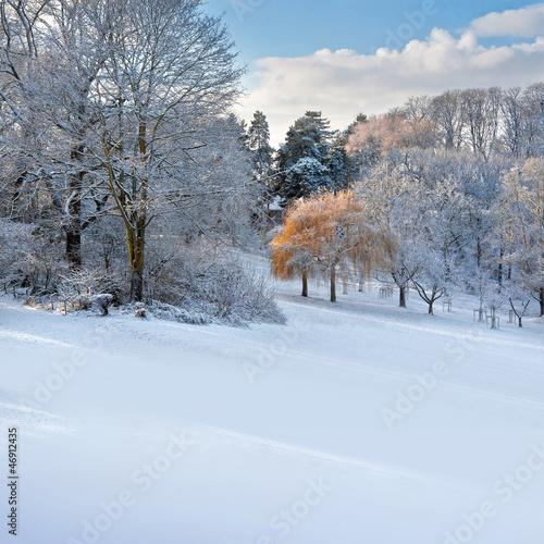 Fototapeten,winter,leaf,natur,park