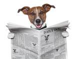 dog newspaper - 46929832