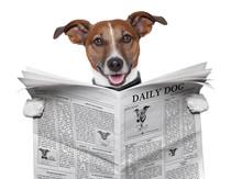 Hund tidningen