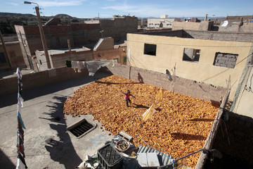 Corn Drying, Moroccan rooftop