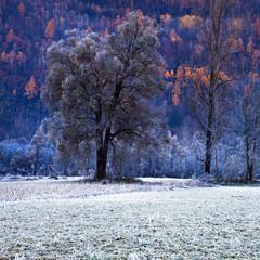 stagione fredda
