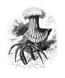 Hermit Crab - Bernard l'Ermite