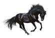Black stallion in motion - isolated on white