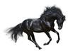 Fototapeten,galopp,pferd,isoliert,schwarz