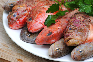 mediterranean fresh fishes on rustic wood background