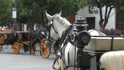 pferdekutschen in sevilla