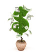Money tree, potted tree in the form of a dollar sign