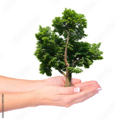 Hands and tree isolated