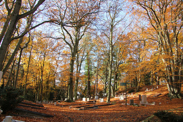 Cemetery in a fall forest