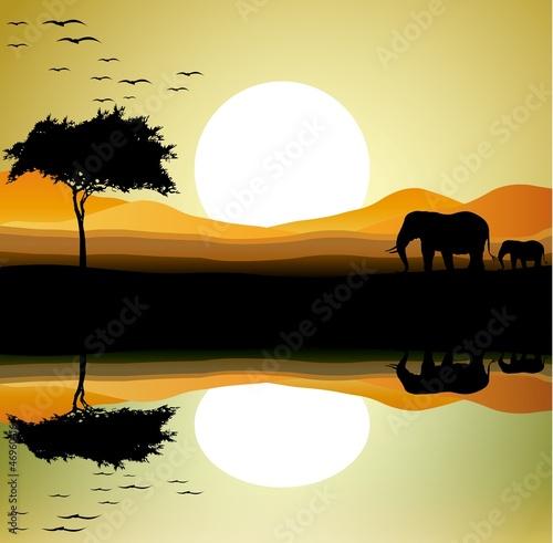 sylwetka piękno słoni w tle krajobrazu