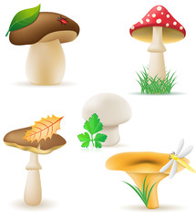 set icons mushrooms illustration