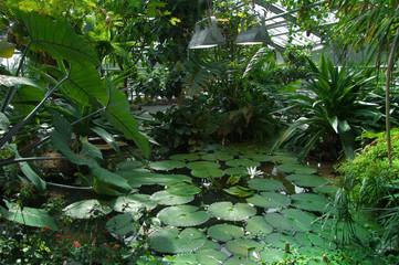 tropical greenhouse scenery