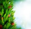 Christmas Tree Border Design over Green Blurred background
