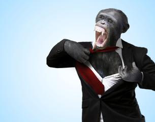 Annoyed Monkey Shouting