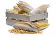 Cajón con mazorcas de maíz secas y sus vainas y granos