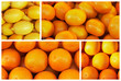 The oranges and lemons in the collage