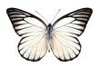 Butterfly species Prioneris philonome - 46980220