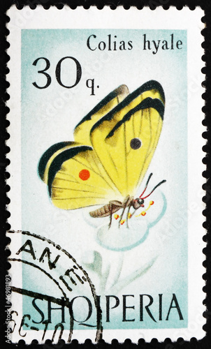 Postage stamp Portugal 1966 Cloudless Sulphur Butterfly, Colias