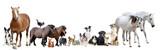 Fototapete Gruppe - Hund - Haustiere